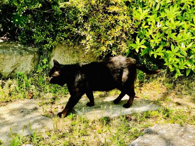 歩み寄る黒猫